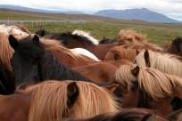 Islandia05_130