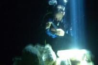 Diving_271