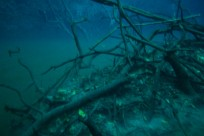 Diving_391