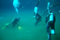 Diving_431