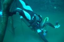 Diving_441
