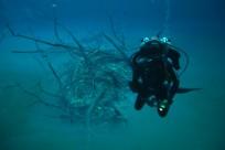 Diving_471