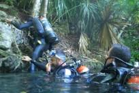 Diving_501