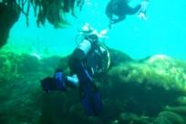 Diving_521