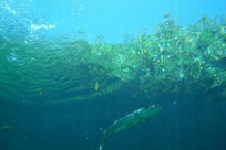 Diving_531