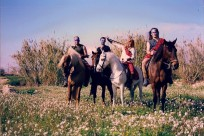Horses03